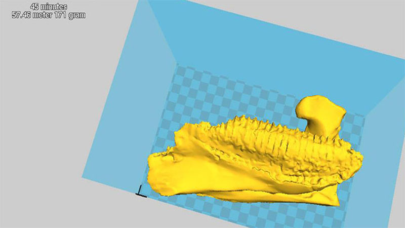 Preparing dinosaur jaw for 3D printing