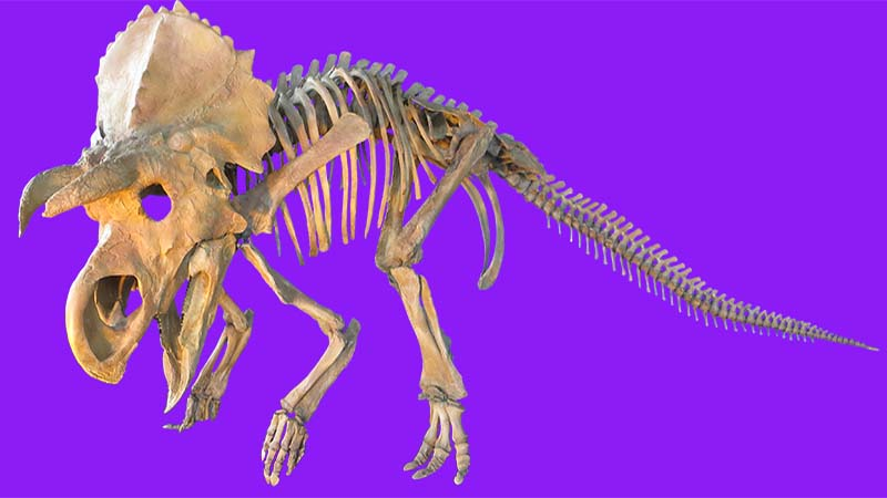 New dinosaur species restored with laser scanning and 3D printing
