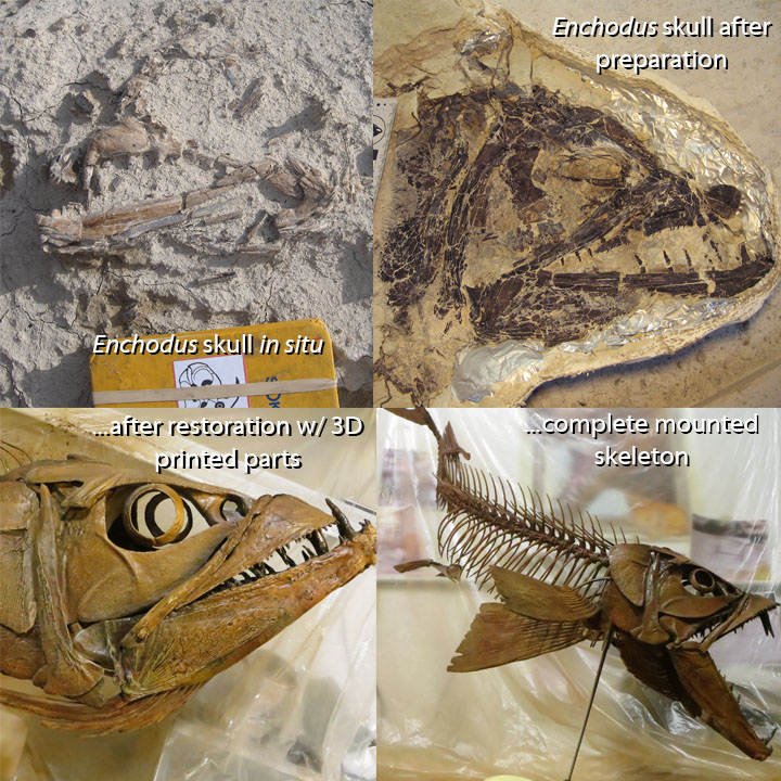Cretaceous fish skull restored with 3D printing